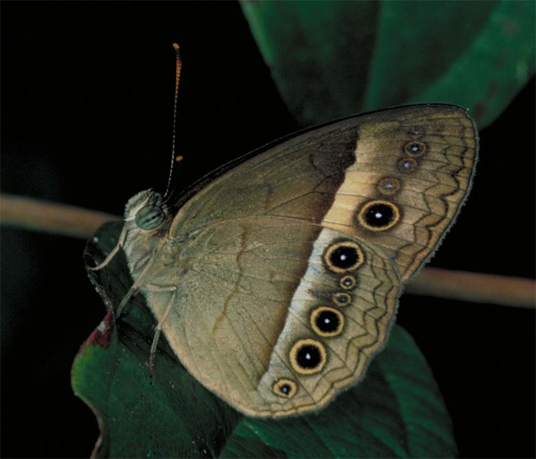 Images Gt Animals Gt Invertebrates