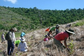 Work continues on rainforest corridors