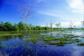 Celebrating World Wetlands Day 2nd February