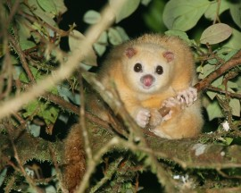 Very Important Protected (VIP) Wet Tropics Wildlife in the spotlight