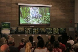Wet Tropics Wild Talks and events ramp up
