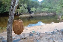 Successful Wet Tropics grants