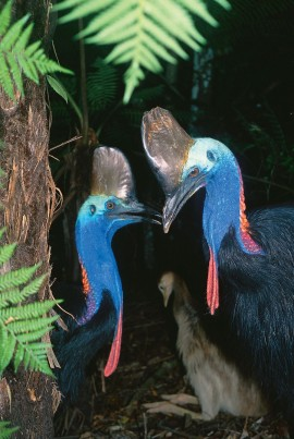 Cassowary Award 2012 Nominations now open!