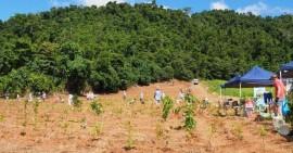 Corridor opens new avenues for Wet Tropics wildlife