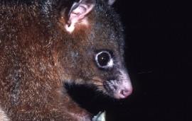 Wet Tropics highlights biodiversity