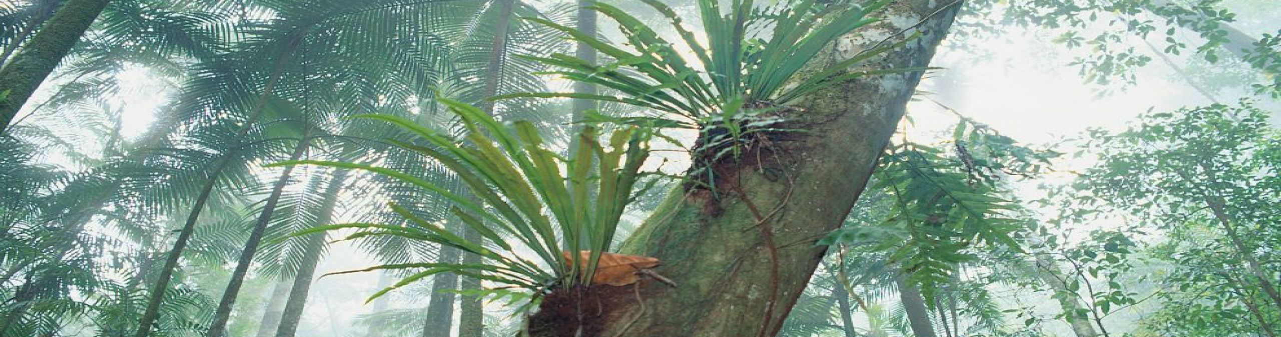 Tropical Rainforest Plants List Information Pictures amp Facts