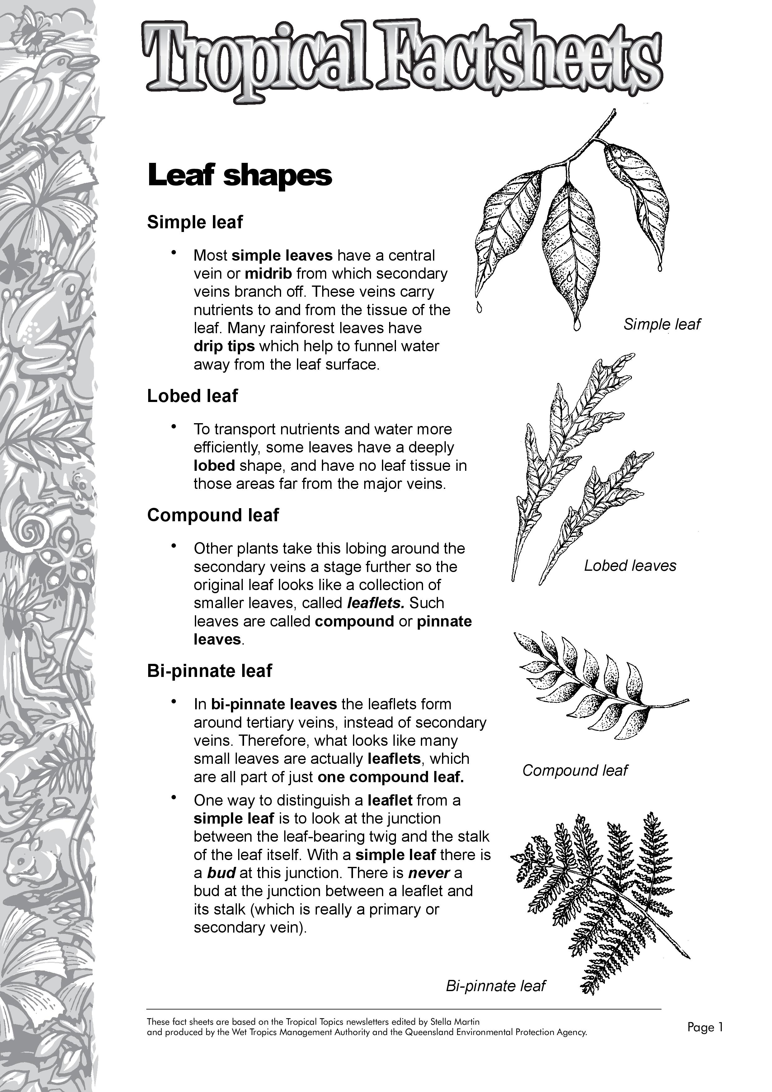 Leaf Shape Factsheet - Rainforest Explorer Photographer: N/A