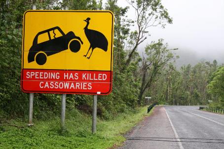 Cassowary sign Photographer: WTMA
