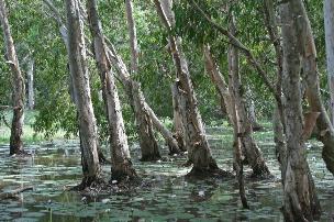 Keatings Lagoon wetlandPhotographer: Campbell Clarke