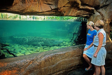 Crocodile view Photographer: Cairns Rainforest Dome