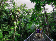 Daintree Discovery Centre Photographer: Daintree Discovery Centre