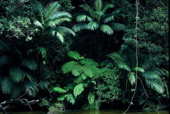 Ferns - Upper Mossman CreekPhotographer: Kerry Trapnell