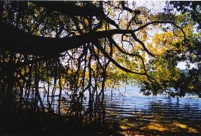 Lake Barrine Photographer: Campbell Clarke