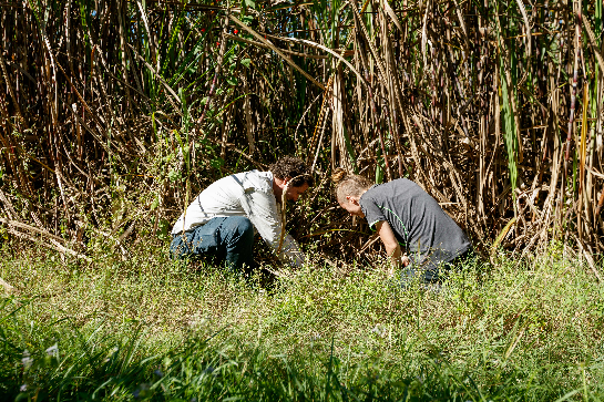 Yellow Crazy Ant (YCA) Delimitation - NAMAC Taskforce Photographer: Terrain NRM