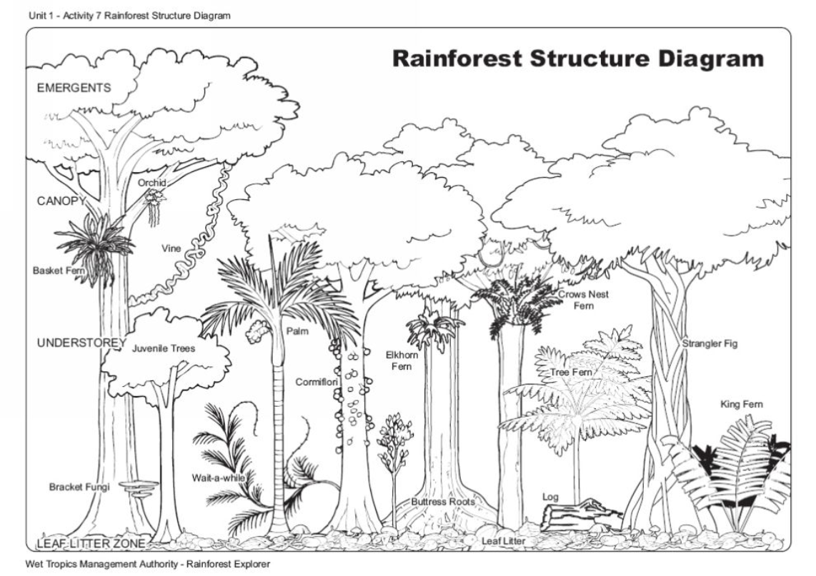Diagram Of A Rain Forest Car Fuse Box Wiring Wet Rainforest Structure Tropics Management Authority Rh Wettropics Gov Au 3 Layers The Printable
