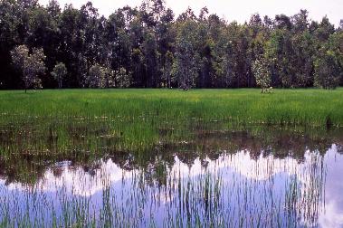 WetlandPhotographer: WTMA
