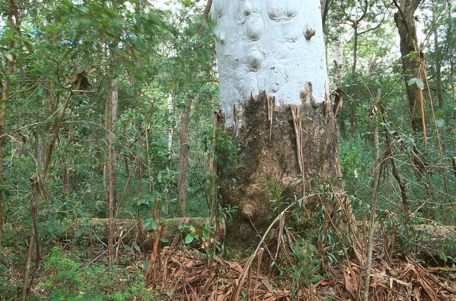 Wet sclerophyll forestPhotographer: WTMA