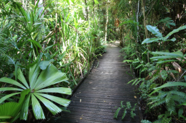 Cape Tribulation boardwalk undergoes upgrade