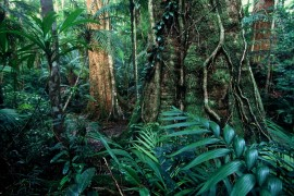 Wet Tropics second in the world