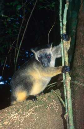 Students win award for tree-kangaroo mapping
