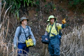 Yellow Crazy Ant Taskforce to target local creeks
