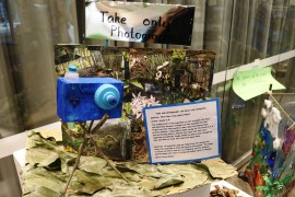 Kids get 'wild' with eco-art sculptures