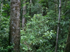 Rainforest, Mount Hypipamee Photographer: Campbell Clarke