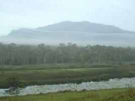 Eubenangee Swamp Photographer: Campbell Clarke