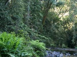 Henrietta Creek to Goolagan Creek walk Photographer: Campbell Clarke