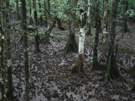 Mangroves, Marrja Boardwalk Photographer: Campbell Clarke