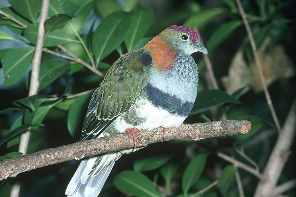 Learn more about wet tropics rainforest birds