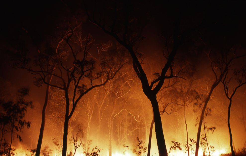 Climate change and rainforest fires