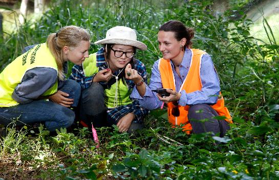 Yellow Crazy Ant (YCA) Volunteers  Photographer: Anna Rogers