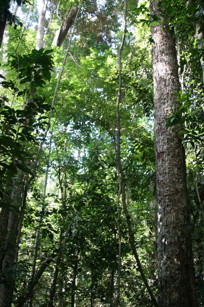 Mabi forest, Wongabel walk Photographer: Campbell Clarke