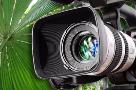 Media in the tropics Photographer: Capture