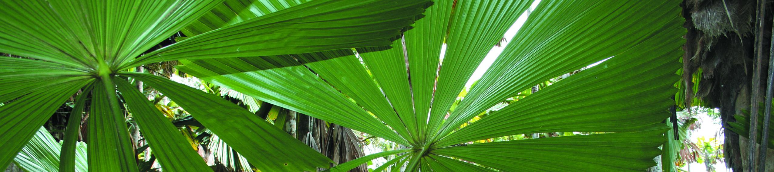 Wet Tropics Management Authority
